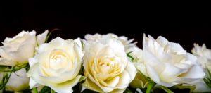 dia da noiva bh flores brancas